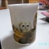 マグカップにゃんこ600×450